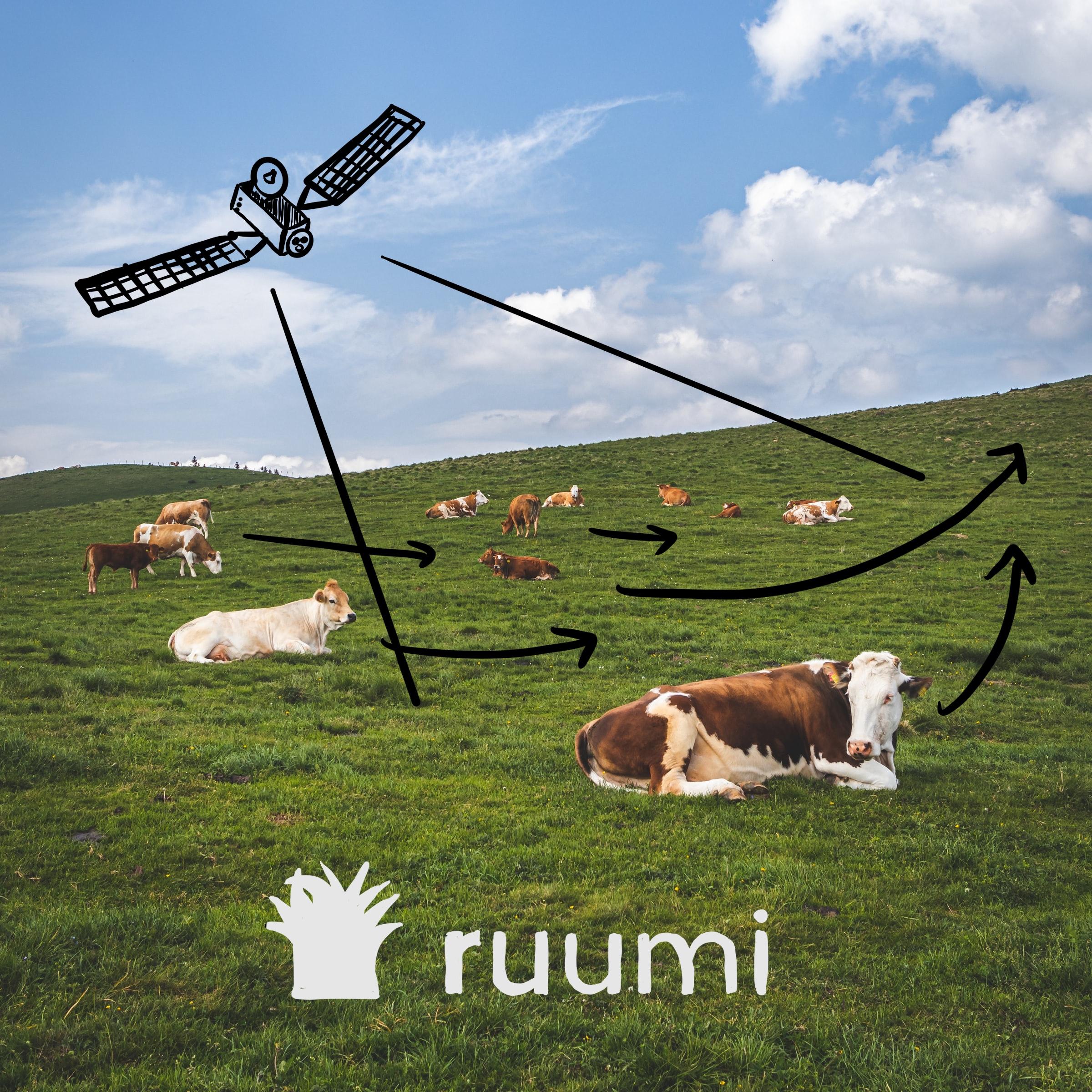 ruumi Portfolio Company